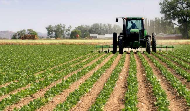 Esperan que Tlcan favorezca la agricultura